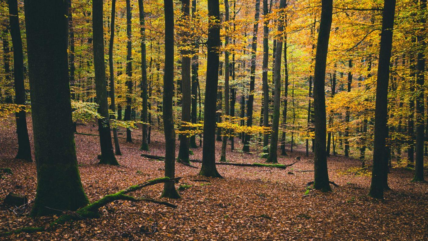 Naturheilpraxis-Andree-Reuter als Laubwald
